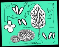Ilustracija belih rastlin na zeleni podlagi.